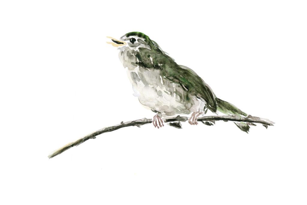 鳥/大和書房・書籍用