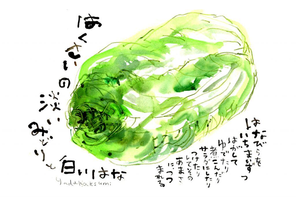 白菜の絵/オリジナル